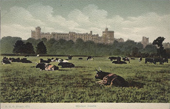 This View By FGO Stuart Is Indeed Rare And Dates From Around 1900 The Home Park Has Not Been Used For Grazing Cattle Many Years Certainly Since