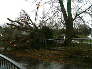 Poplar down at Vansittart Rec 02 Feb 02