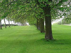 Long Walk Trees CU